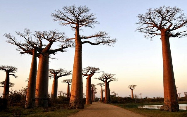 allee baobabs 640x400